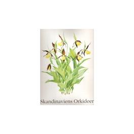 Scandinaviens Orkideer